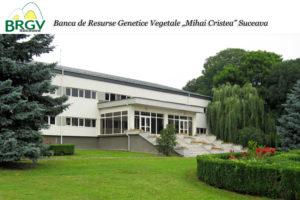 """Banca de Resurse Genetice Vegetale """"Mihai Cristea"""" Suceava"""